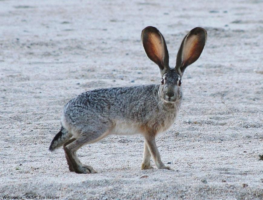 Pest Control Rabbits Hearts Pest Management